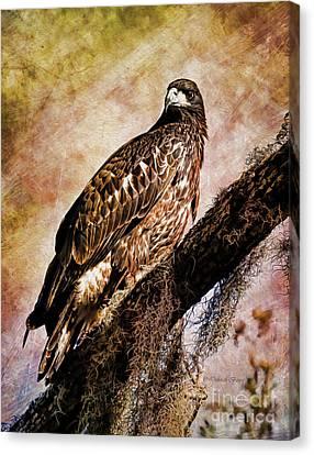 Young Eagle Pose II Canvas Print by Deborah Benoit