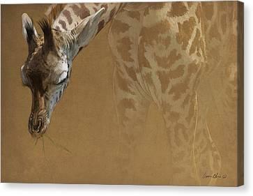Giraffe Canvas Print - Young Giraffe by Aaron Blaise
