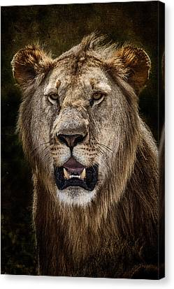 Canvas Print featuring the photograph Young Male Lion Texture Blend by Mike Gaudaur
