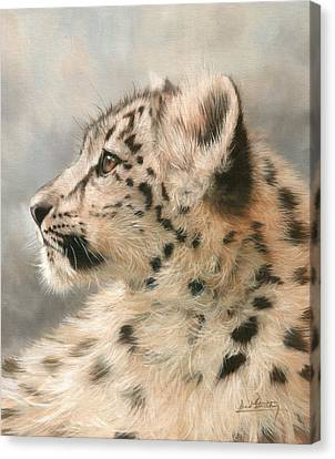 Young Snow Leopard Canvas Print by David Stribbling