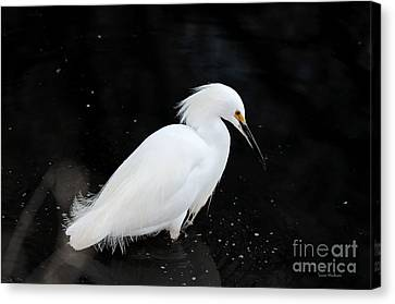 Canvas Print featuring the photograph Young Snowy Egret by Susan Wiedmann