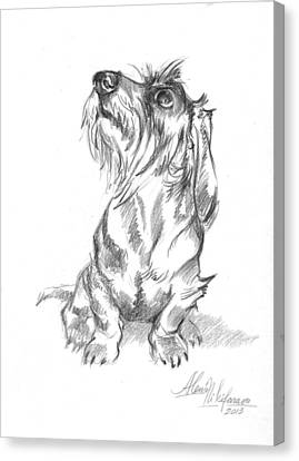 Young Wire-haired Dachshund Looking Up Canvas Print