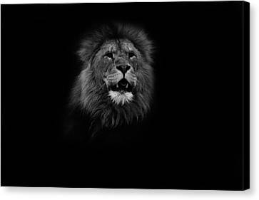 Your Gonna Hear Me Roar Canvas Print by Martin Newman