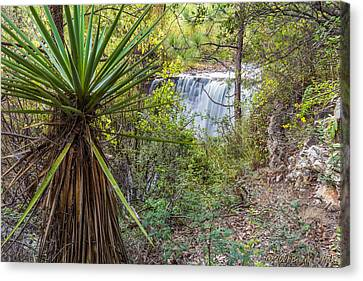 Canvas Print featuring the photograph Yucca And Waterfall by Beverly Parks