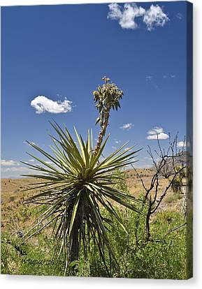 Yucca Fights Back Canvas Print