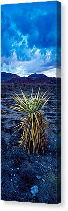 Yucca Flower In Red Rock Canyon Canvas Print