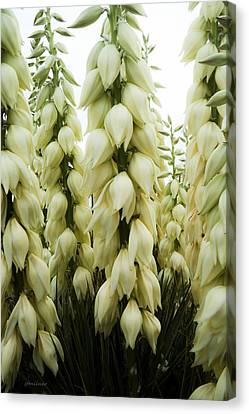 Yucca Forest Canvas Print by Steven Milner
