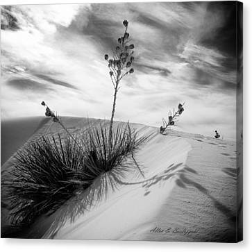 Yucca In White Sand Canvas Print by Allen Biedrzycki