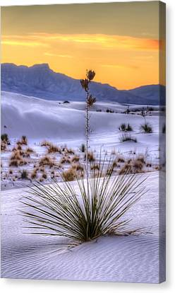 Canvas Print featuring the photograph Yucca On White Sand by Kristal Kraft