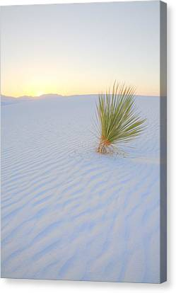 Canvas Print featuring the photograph Yucca Plant At White Sands by Alan Vance Ley