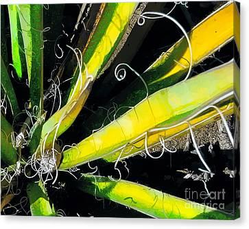 Yucca Spirals Canvas Print