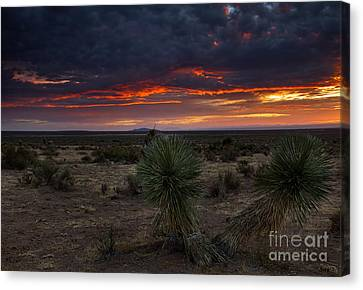 Yucca Sunset Canvas Print by Mike  Dawson