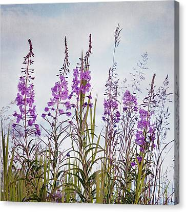 Yukon State Flower Canvas Print