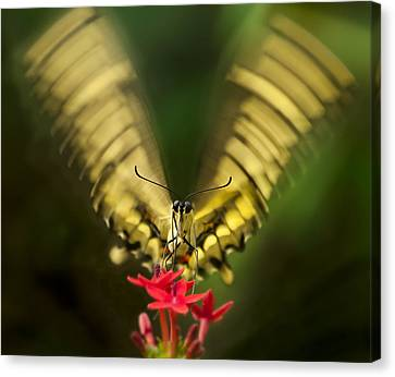 Butterfly In Motion Canvas Print - Yum by Jennifer