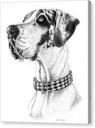 Zack Canvas Print by Catherine Garneau