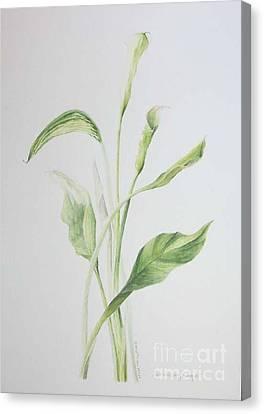 Zad A Bouquet Canvas Print