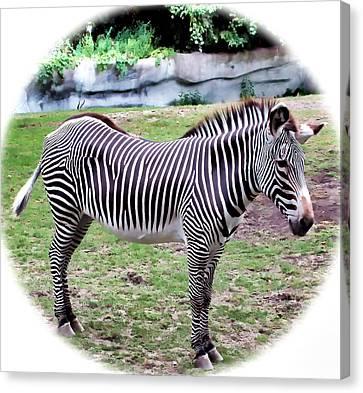 Canvas Print featuring the photograph Zebra 1 by Dawn Eshelman