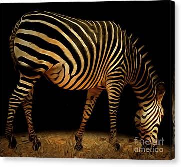Zebra 20150210brun Canvas Print