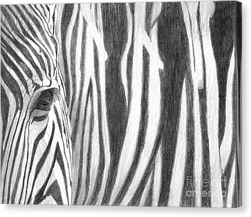 Canvas Print featuring the drawing Zebra by Denise Deiloh