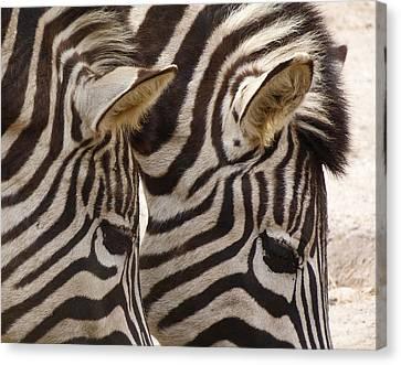 Zebra Double Canvas Print by Margaret Saheed