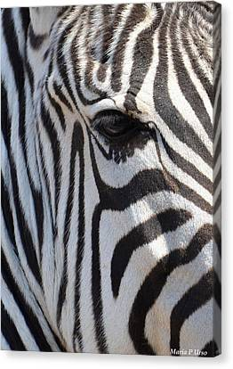 Zebra Eye Abstract Canvas Print