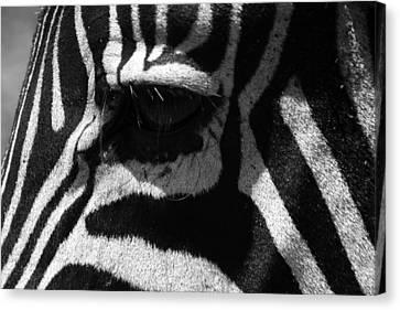 Zebra Eye Canvas Print by Aidan Moran