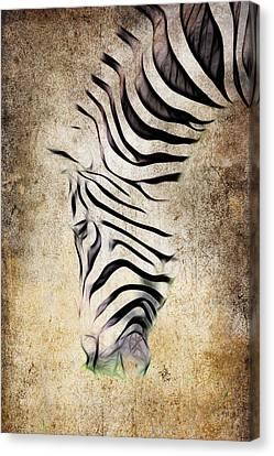 Zebra Fade Canvas Print