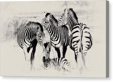 Zebra Foursome Canvas Print by Christa Niederer