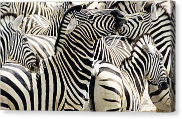 Canvas Print featuring the photograph Zebra Gathering by Dennis Cox WorldViews