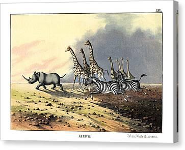 Zebra Giraffe White Rhinoceros Canvas Print