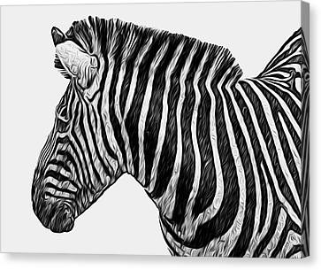 Zebra - Happened At The Zoo Canvas Print by Jack Zulli