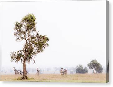 Zebra In The Mist Canvas Print by Mike Gaudaur
