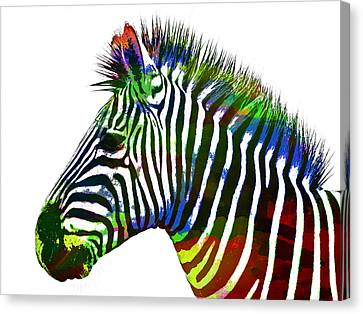 Zebra In Watercolor Paint Canvas Print by Celestial Images