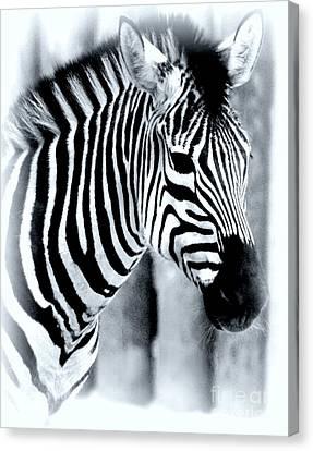 Zebra Canvas Print by Kathleen Struckle