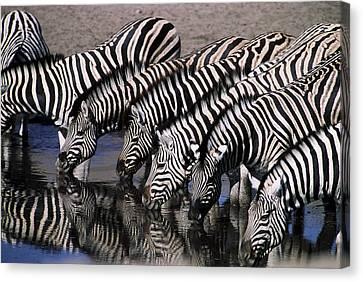 Zebra Line Canvas Print by Stefan Carpenter
