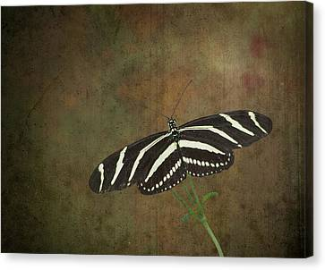 Zebra Longwing  Butterfly-1 Canvas Print by Rudy Umans