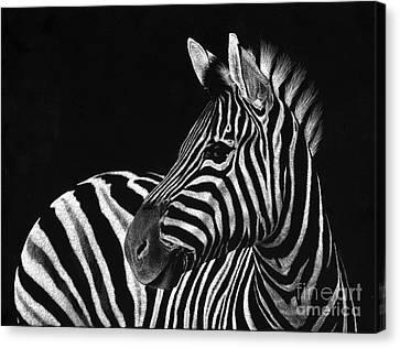 Zebra No. 3 Canvas Print by Sheryl Unwin
