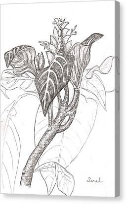 Zebra Plant Canvas Print by Sarah Loft