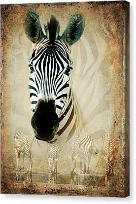 Zebra Profile Canvas Print by Ronel Broderick