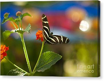 Zebra Striped Butterflies Canvas Print by Cari Gesch