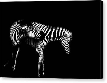 Light And Dark Canvas Print - Zebra Stripes by Martin Newman