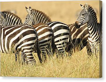 Zebra Stripes Canvas Print