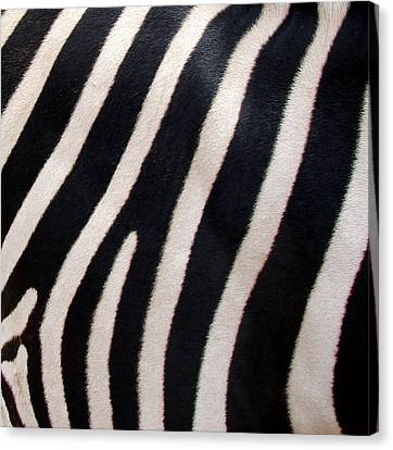Canvas Print featuring the photograph Zebra Stripes by Ramona Johnston