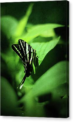 Zebra Swallowtail Butterfly Canvas Print by Rebecca Sherman