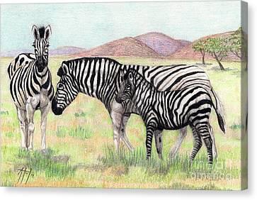 Zebra Trio Canvas Print by Audrey Van Tassell