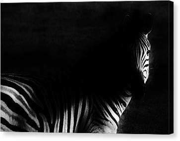 Zebra Canvas Print by Werner Lehmann