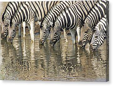Canvas Print featuring the photograph Zebras At Water Hole by Dennis Cox WorldViews