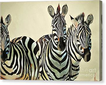 Canvas Print featuring the drawing Zebras Drawing by Maja Sokolowska