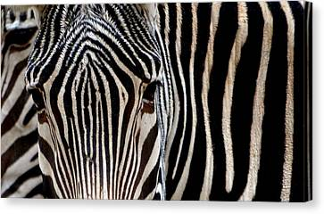 Canvas Print featuring the photograph Zebras Face To Face by Nadalyn Larsen