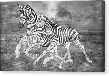 Zebras I Of II Canvas Print
